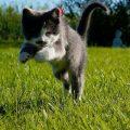 夢占い 猫が逃げる夢は大切な人がいなくなる予兆。