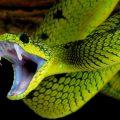 夢占い 蛇に噛まれる夢はあなたに舞い込むチャンスの予兆。