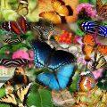 夢占い 虫が大量発生する夢は精神疲労と不摂生な生活が原因。