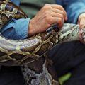 夢占い 蛇を捕まえる夢は金運低下もしくは健康状態の悪化。