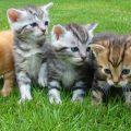 夢占い 猫を捕まえる夢は願いが叶わない可能性がある凶夢!?
