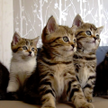 夢占い 猫がたくさん出てきたら金運ダウン 女性トラブルの暗示。