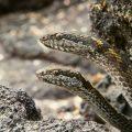 夢占い 蛇に追いかけられる夢は異性とのトラブルの暗示。