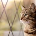 夢占い 猫が家に入る夢はあなたの浮気心。もしくは不吉な暗示。