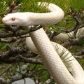 夢占い 蛇を殺す夢は縛られていたものから解放されるチャンス。