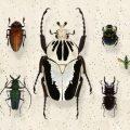 夢占い 虫の死骸はあなたの環境が良い方向へ変化する暗示。