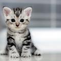 夢占い 猫を飼う夢は秘密を抱えている気持ちの表れ。